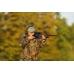 Возможность использования прицела Aimpoint H34S на охотах любого типа