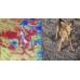 Сравнение реальной картинки и картинки тепловизора